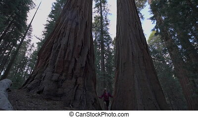 Hiker, admiring Giant Sequoia trees slow motion - Sequoia...