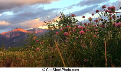 Castle Rock Clover Flowers Sequoia National Park Sunset...
