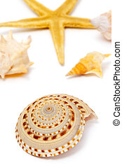 seashells and starfish - a starfish and some seashells...
