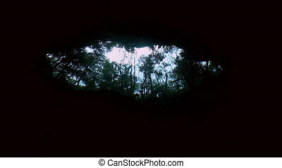 View of trees from underwater in Mexican cenote. - View of...