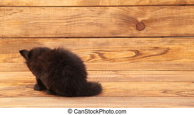 Little black cat - small black cat on a wooden table