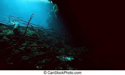 Tree roots and rocks in Yucatan Mexico cenote. - Tree roots...