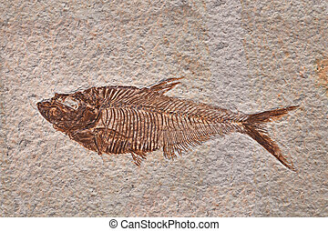 fossil fish - prehistoric fossil fish enclosed in stone rock