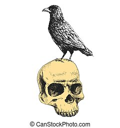 Vector raven on the skull - Beautiful vector image with...