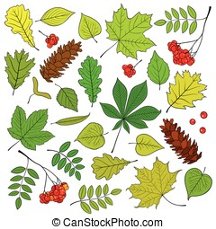 Outline tree leaves set - Vector set of different, isolated,...