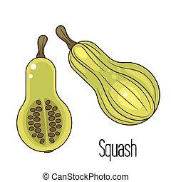 Green squash or zucchini vector illustration.