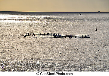 Fish Farm in the Atlantic Ocean at Sunset