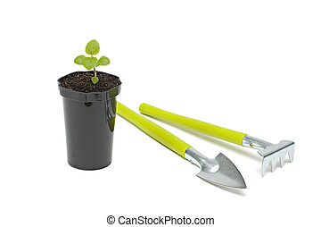 Fresh sprout - Seedlings in flower pot isolated on white...