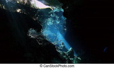 Striped fish in bush lake Yucatan Mexico cenote. - Striped...