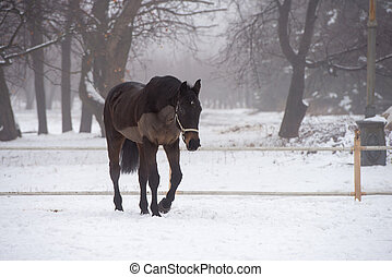 horse - beautiful horse in the winter outdoors