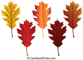 Fall Leaves - Brilliant oak leaves in various fall colors