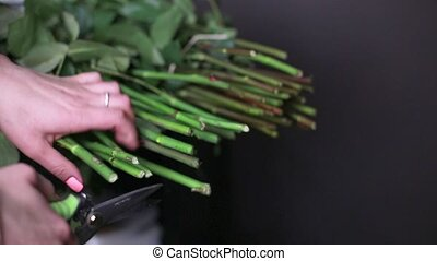 Female hands with scissors cut the bottom of the stems of...