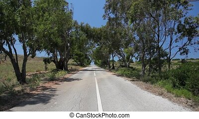 Country road with trees in Algarve, Portugal