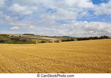 wolds harvest - straw bales in a harvested barley field with...