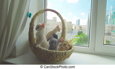 Cute kitten with mother cat in a basket by the window
