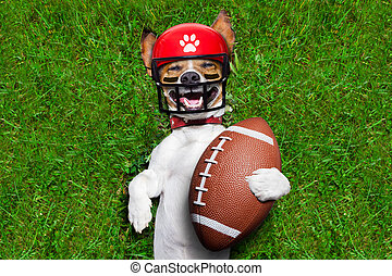 funny soccer dog - soccer jack russell dog holding a rugby...