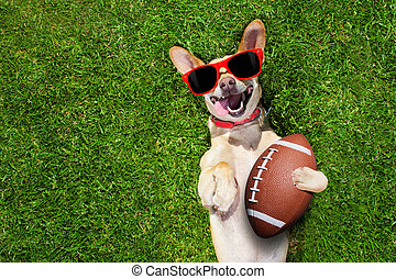 rugby soccer ball - soccer chihuahua dog holding a rugby...