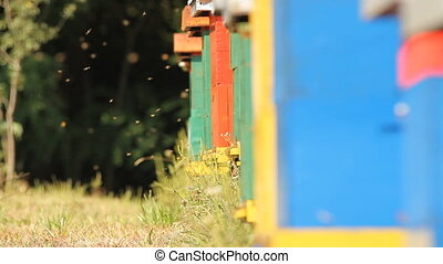 The entrance to a honey bee box, where the bees go in and...