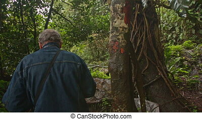 Backside Man Picks Way along Path in Tropical Forest -...