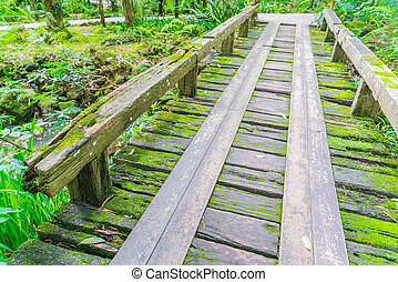 Wooden bridge in tropical green forest covered with moss -...