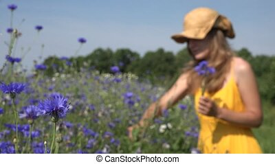 romantic woman reap cornflower flowers in bouquet in field....