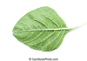Fresh Spinach leaf venation close up on white background