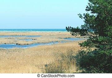 walking through the Western Pomerania Lagoon Area National...
