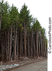 Forest,clearcut, concept of environmental damage