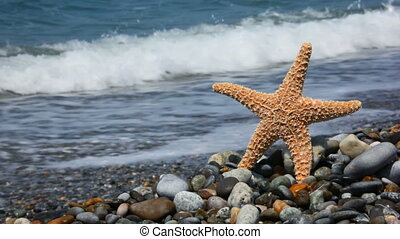 sea star standing on stones in beach, sea surf in background