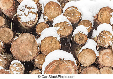 pile of trunks in winter with marks to identify