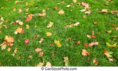 autumn red leaves on green grass, rotating camera
