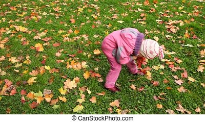 little girl gathering autumn maple leaves and stretching out to camera