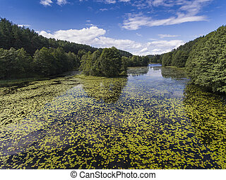Black River Hancza in Turtul Suwalszczyzna, Poland Summer...