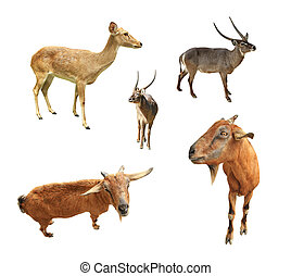 Collection of animal wildlife