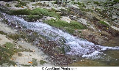 brook running on rock to mountain river in forest