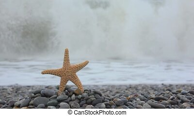 sea star standing on pebble coast, sea surf wave in background