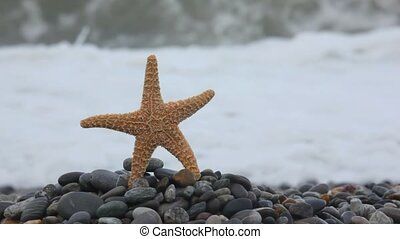 sea star standing on pebble beach, sea surf wave in background