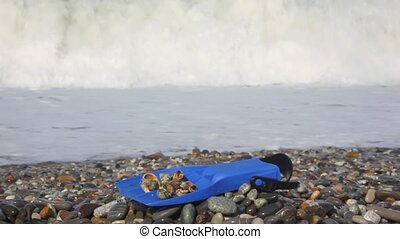 flipper with seashells on pebble coast against sea surf wave