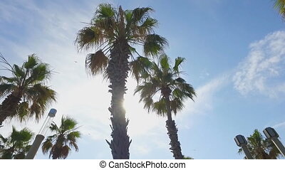 Camera fly among palm trees