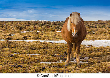 Farming horse over dry grass with clear blue sky background,...