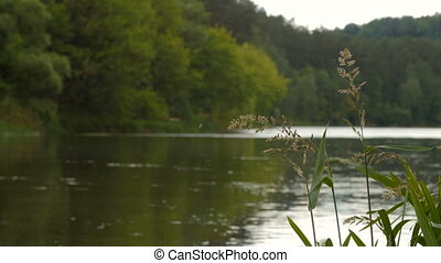 Natural background of bent grass against water - Natural...