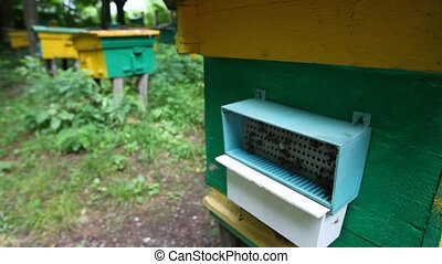 bees with honey coming to beehive on apiary, camera moving...