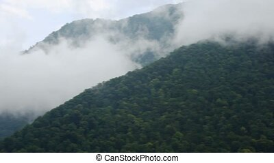 fog in mountains with forest landscape, panning, sochi, russia