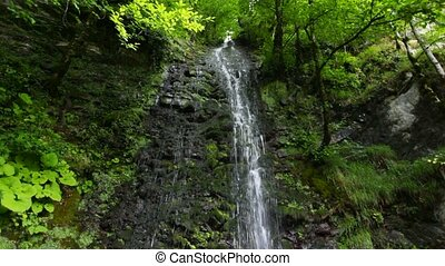 waterfall in forest, panning downwards, sochi, russia