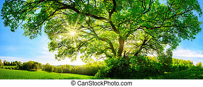 The sun shining through a majestic oak tree - The sun...