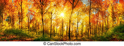 Forest panorama in autumn - Autumn scenery in panorama...