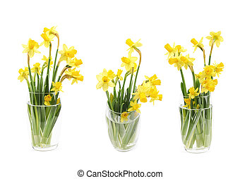 Yellow narcissus flower isolated - Bouquet of yellow...