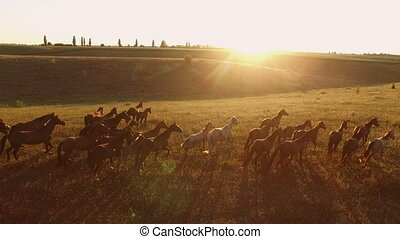 Horses are running. Aerial view of horse flock. Forget about...