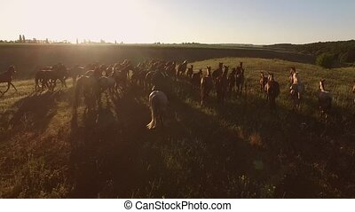 Group of running horses. Horseman and sunny sky. Human among...