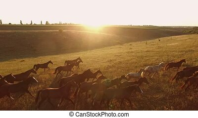 Horses running on grass. Aerial view of horse herd. Born to...